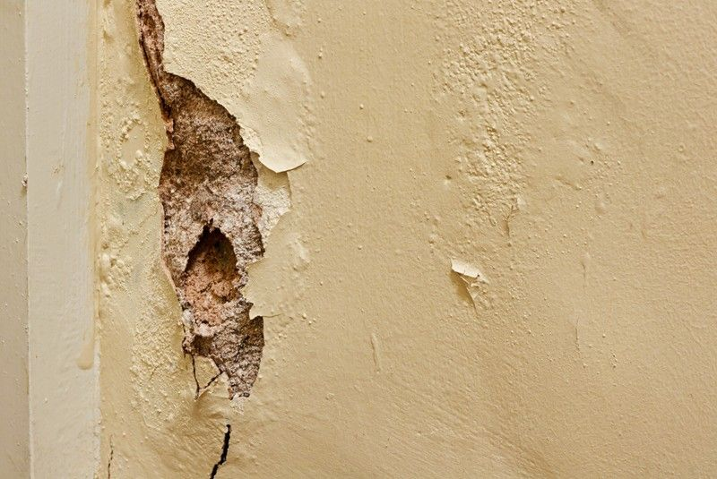 Dry Rot Treatments in Christchurch